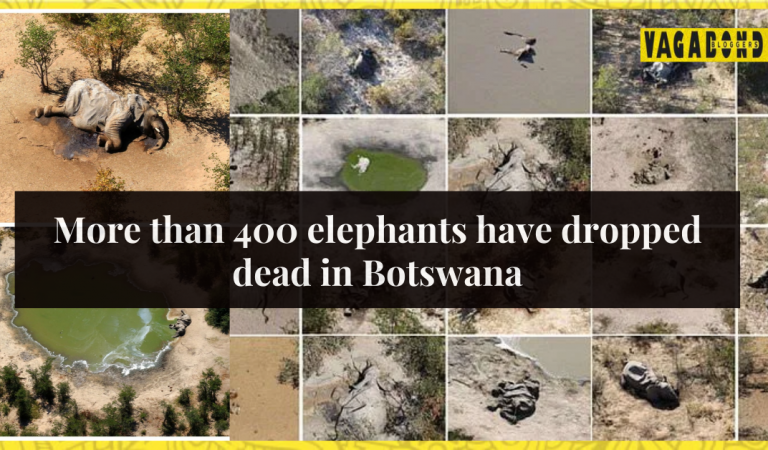 Hundreds of Elephants Have Died in Botswana.