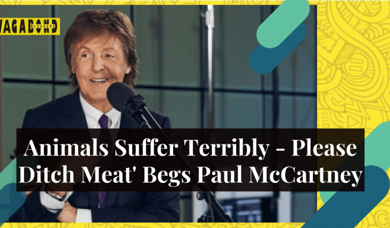 'Animals Suffer Terribly – Please Ditch Meat' Begs Paul McCartney